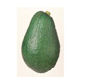 AVOCADO ARDITH