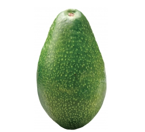 AVOCADO ETTINGER